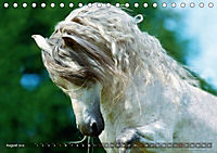 Edle spanische Pferde - Pura Raza Espanola (Tischkalender 2018 DIN A5 quer) - Produktdetailbild 8