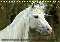Edle spanische Pferde - Pura Raza Espanola (Tischkalender 2018 DIN A5 quer) - Produktdetailbild 5