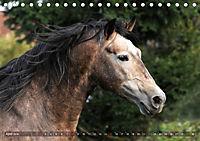 Edle spanische Pferde - Pura Raza Espanola (Tischkalender 2018 DIN A5 quer) - Produktdetailbild 4
