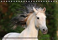 Edle spanische Pferde - Pura Raza Espanola (Tischkalender 2018 DIN A5 quer) - Produktdetailbild 10