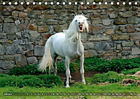 Edle spanische Pferde - Pura Raza Espanola (Tischkalender 2018 DIN A5 quer) - Produktdetailbild 7