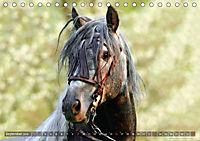 Edle spanische Pferde - Pura Raza Espanola (Tischkalender 2018 DIN A5 quer) - Produktdetailbild 9