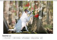 Ein Jack Russell Terrier auf der Suche nach der Traumfrau (Wandkalender 2018 DIN A3 quer) Dieser erfolgreiche Kalender w - Produktdetailbild 12