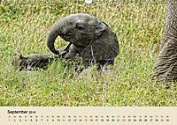 Elefantenkinder. Spielplatz Savanne (Wandkalender 2018 DIN A3 quer) - Produktdetailbild 9