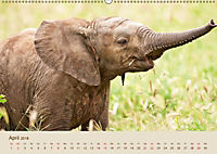 Elefantenkinder: Winzlinge im Land der Riesen (Wandkalender 2018 DIN A2 quer) - Produktdetailbild 4