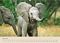 Elefantenkinder: Winzlinge im Land der Riesen (Wandkalender 2018 DIN A2 quer) - Produktdetailbild 6