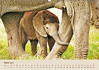 Elefantenkinder: Winzlinge im Land der Riesen (Wandkalender 2018 DIN A2 quer) - Produktdetailbild 3