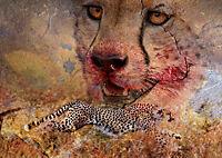 Emotionale Momente: African Dreams (Posterbuch DIN A3 quer) - Produktdetailbild 4