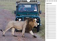 Emotionale Momente: Auf Fotosafari in Kenia (Wandkalender 2018 DIN A4 quer) Dieser erfolgreiche Kalender wurde dieses Ja - Produktdetailbild 6