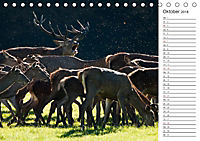Emotionale Momente: Hirschbrunft. Part III. (Tischkalender 2018 DIN A5 quer) - Produktdetailbild 10