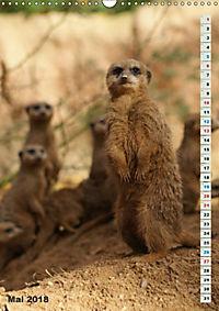 Erdmännchen-Meerkats-Surikate (Wandkalender 2018 DIN A3 hoch) - Produktdetailbild 5