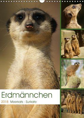 Erdmännchen-Meerkats-Surikate (Wandkalender 2018 DIN A3 hoch), Peter Hebgen