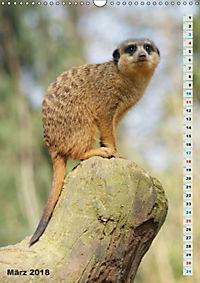 Erdmännchen-Meerkats-Surikate (Wandkalender 2018 DIN A3 hoch) - Produktdetailbild 3
