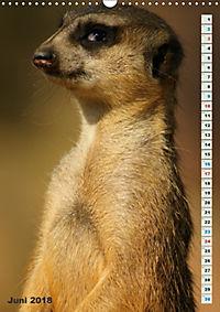Erdmännchen-Meerkats-Surikate (Wandkalender 2018 DIN A3 hoch) - Produktdetailbild 6