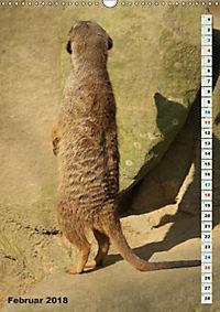 Erdmännchen-Meerkats-Surikate (Wandkalender 2018 DIN A3 hoch) - Produktdetailbild 2