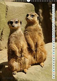 Erdmännchen-Meerkats-Surikate (Wandkalender 2018 DIN A3 hoch) - Produktdetailbild 7