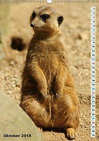 Erdmännchen-Meerkats-Surikate (Wandkalender 2018 DIN A3 hoch) - Produktdetailbild 10