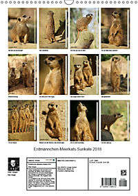Erdmännchen-Meerkats-Surikate (Wandkalender 2018 DIN A3 hoch) - Produktdetailbild 13