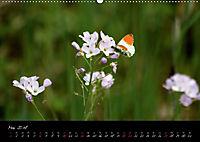 Faszination Gartenteich (Wandkalender 2018 DIN A2 quer) - Produktdetailbild 5