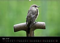 Faszination Gartenteich (Wandkalender 2018 DIN A2 quer) - Produktdetailbild 4