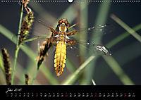 Faszination Gartenteich (Wandkalender 2018 DIN A2 quer) - Produktdetailbild 7