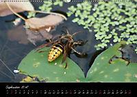 Faszination Gartenteich (Wandkalender 2018 DIN A2 quer) - Produktdetailbild 9
