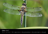 Faszination Gartenteich (Wandkalender 2018 DIN A2 quer) - Produktdetailbild 10