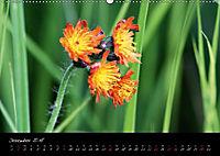 Faszination Gartenteich (Wandkalender 2018 DIN A2 quer) - Produktdetailbild 12