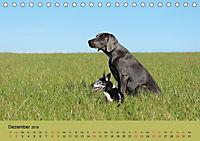 Fellige Feldnasen (Tischkalender 2018 DIN A5 quer) - Produktdetailbild 12