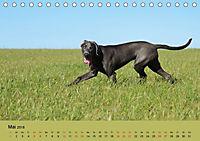 Fellige Feldnasen (Tischkalender 2018 DIN A5 quer) - Produktdetailbild 5