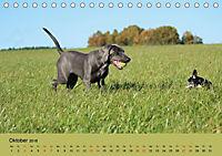 Fellige Feldnasen (Tischkalender 2018 DIN A5 quer) - Produktdetailbild 10