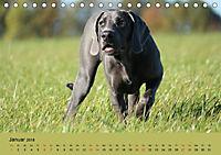 Fellige Feldnasen (Tischkalender 2018 DIN A5 quer) - Produktdetailbild 1