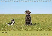 Fellige Feldnasen (Tischkalender 2018 DIN A5 quer) - Produktdetailbild 6