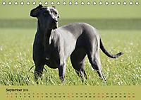 Fellige Feldnasen (Tischkalender 2018 DIN A5 quer) - Produktdetailbild 9