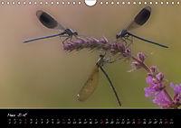 Fliegende Juwelen - Libellen (Wandkalender 2018 DIN A4 quer) Dieser erfolgreiche Kalender wurde dieses Jahr mit gleichen - Produktdetailbild 3