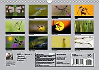 Fliegende Juwelen - Libellen (Wandkalender 2018 DIN A4 quer) Dieser erfolgreiche Kalender wurde dieses Jahr mit gleichen - Produktdetailbild 13