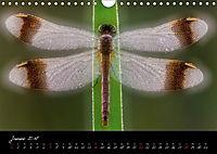 Fliegende Juwelen - Libellen (Wandkalender 2018 DIN A4 quer) Dieser erfolgreiche Kalender wurde dieses Jahr mit gleichen - Produktdetailbild 1