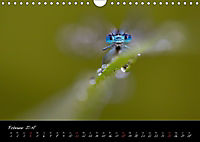 Fliegende Juwelen - Libellen (Wandkalender 2018 DIN A4 quer) Dieser erfolgreiche Kalender wurde dieses Jahr mit gleichen - Produktdetailbild 2