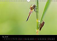Fliegende Juwelen - Libellen (Wandkalender 2018 DIN A4 quer) Dieser erfolgreiche Kalender wurde dieses Jahr mit gleichen - Produktdetailbild 5