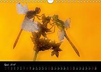 Fliegende Juwelen - Libellen (Wandkalender 2018 DIN A4 quer) Dieser erfolgreiche Kalender wurde dieses Jahr mit gleichen - Produktdetailbild 4
