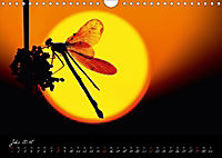 Fliegende Juwelen - Libellen (Wandkalender 2018 DIN A4 quer) Dieser erfolgreiche Kalender wurde dieses Jahr mit gleichen - Produktdetailbild 7