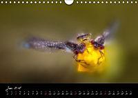Fliegende Juwelen - Libellen (Wandkalender 2018 DIN A4 quer) Dieser erfolgreiche Kalender wurde dieses Jahr mit gleichen - Produktdetailbild 6