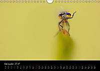Fliegende Juwelen - Libellen (Wandkalender 2018 DIN A4 quer) Dieser erfolgreiche Kalender wurde dieses Jahr mit gleichen - Produktdetailbild 11