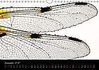 Fliegende Juwelen - Libellen (Wandkalender 2018 DIN A4 quer) Dieser erfolgreiche Kalender wurde dieses Jahr mit gleichen - Produktdetailbild 12