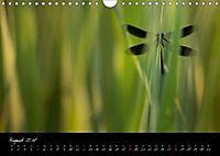 Fliegende Juwelen - Libellen (Wandkalender 2018 DIN A4 quer) Dieser erfolgreiche Kalender wurde dieses Jahr mit gleichen - Produktdetailbild 8