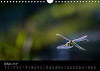 Fliegende Juwelen - Libellen (Wandkalender 2018 DIN A4 quer) Dieser erfolgreiche Kalender wurde dieses Jahr mit gleichen - Produktdetailbild 10