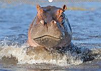 Flusspferde Magie des Augenblicks - Hippos in Afrika (Wandkalender 2018 DIN A3 quer) - Produktdetailbild 8