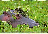 Flusspferde Magie des Augenblicks - Hippos in Afrika (Wandkalender 2018 DIN A3 quer) - Produktdetailbild 1