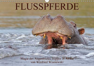 Flusspferde Magie des Augenblicks - Hippos in Afrika (Wandkalender 2018 DIN A3 quer), Winfried Wisniewski