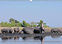 Flusspferde Magie des Augenblicks - Hippos in Afrika (Wandkalender 2018 DIN A3 quer) - Produktdetailbild 4